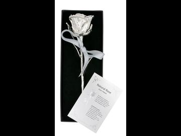 Das Symbol der Liebe als edle Silber-Edition: echte Rose mit einzigartiger Silber-Veredelung