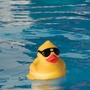 Derby Duck Pool and Spa Thermometer