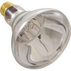 Company Bulb - 12V 100W