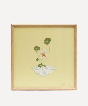 Nasturtium and Scallop Shell Framed Artwork