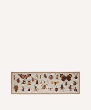 Butterflies, Beetles and Spiders Framed Print