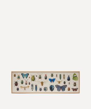 Butterflies and Beetles Framed Print