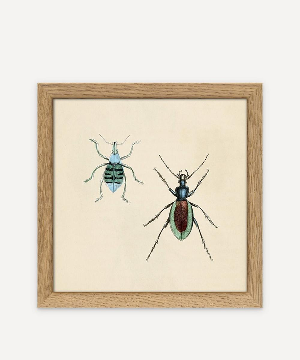 The Dybdahl Co. - Insects Framed Print