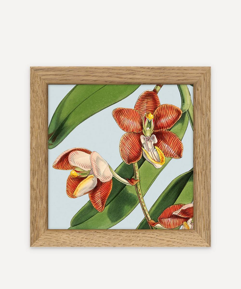 The Dybdahl Co. - Plants Framed Print