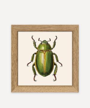 Beetles Framed Print