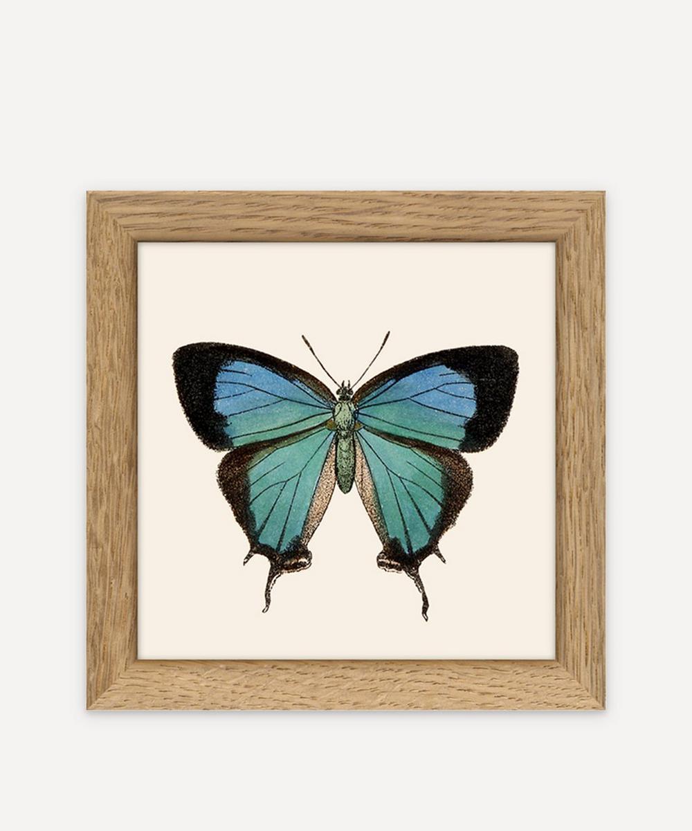The Dybdahl Co. - Butterfly Framed Print