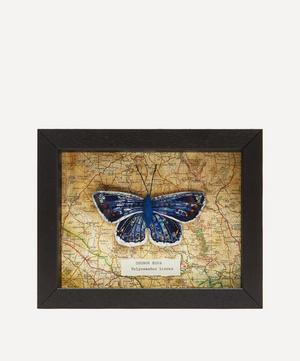 Common Blue Embroidered Butterfly Framed