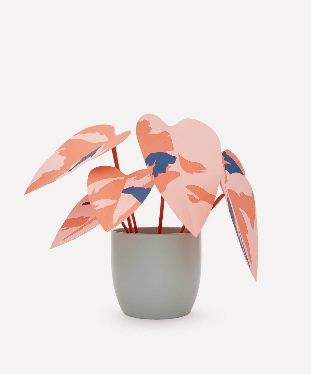 Brazen Botany - Large Coral Princess Plant