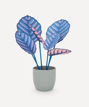Large Blue Pinstripe Plant