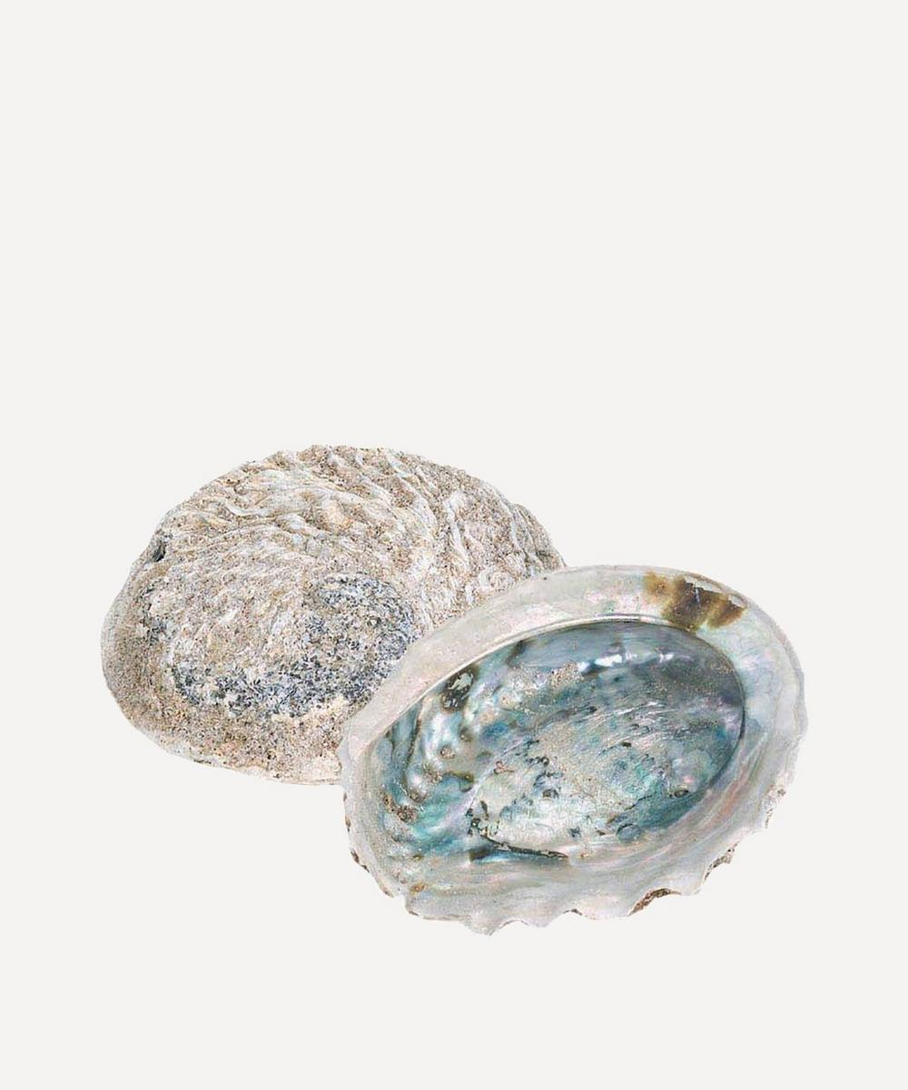 Quay Traders - Small Rough Unpolished Abalone
